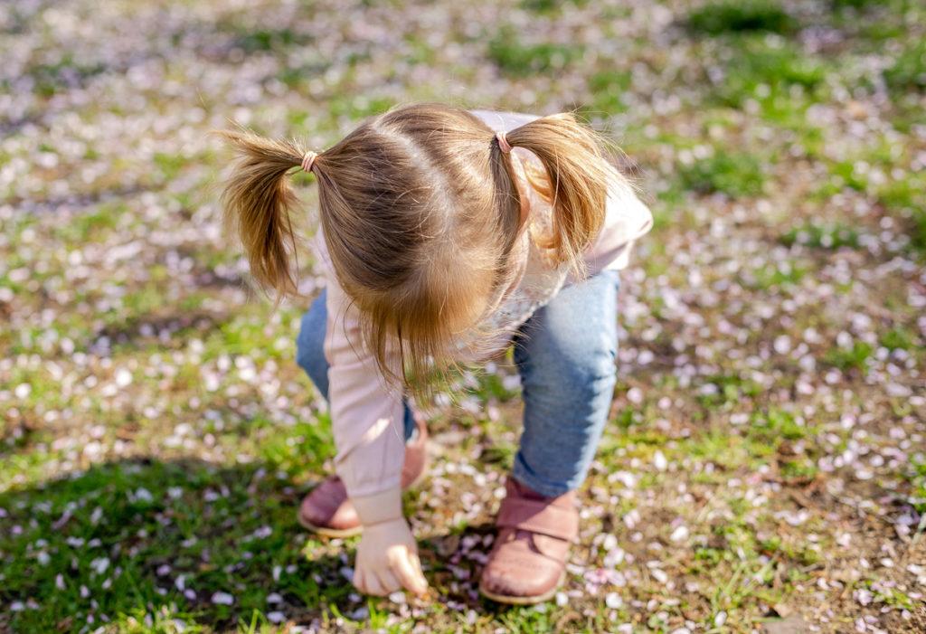 Mädchen sammelt Kirschblüten auf